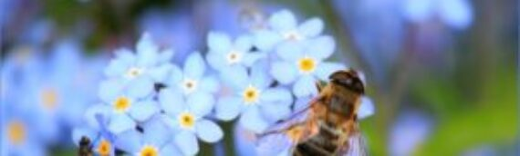 Anaphylaxis and the Bee